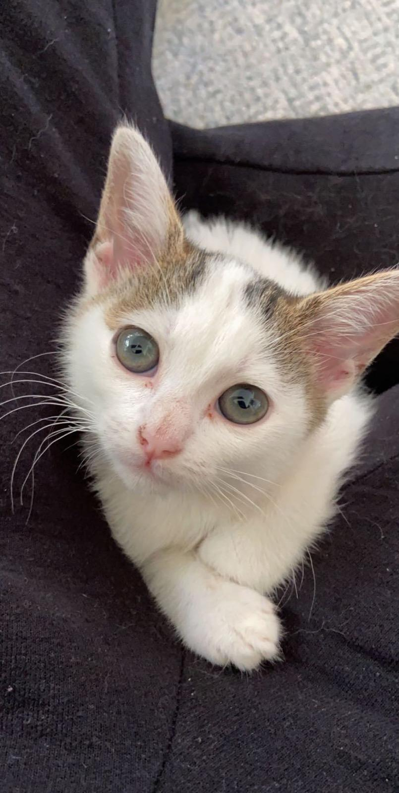 Sally - Lost Dog & Cat Rescue Foundation
